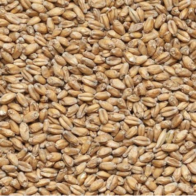 Солод пшеничный WHEAT 9,7 EBC Курский солод 1кг